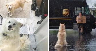 Sur une page Facebook, des coursiers UPS publient les photos des chiens qu'ils rencontrent pendant leurs déplacements
