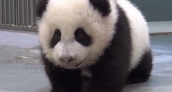La ternura de una mama Panda con su cria