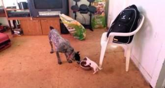 Il piccolo cagnolino si fa rispettare