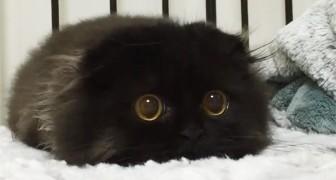 Dit is Gimo, de kat met de grootste ogen die je ooit gezien hebt