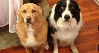 Cachorros que se sentem culpados