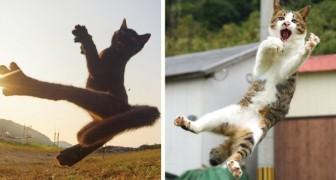 Ce photographe est spécialisé dans la prise de vue de chats ninja: ses photos sont spectaculaires