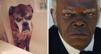 11 pessoas famosas que têm um sósia animal