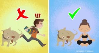 5 dingen die je moet laten (Of niet) om een aanval door een hond te voorkomen