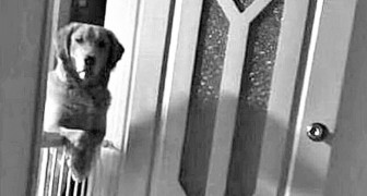 Il cane che adottano al canile passa notti intere a fissare i padroni: il perché lo fa li lascia spiazzati