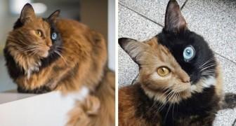 Deze twee-Katten-In-Een is de mooiste grap van moeder natuur die je kunt zien