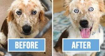 Una ragazza adotta un cane per i suoi 25 anni: le foto prima-dopo non hanno bisogno di parole
