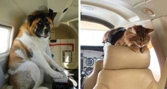 32 tierische Flugzeugpassagiere, an die man sich immer erinnern wird