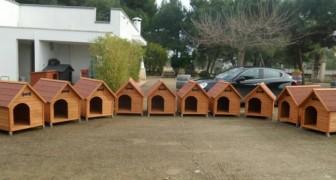 Diese italienische Gemeinde hat Hundehäuschen für Straßenhunde aufgestellt
