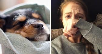 Cosa sognano i cani? La risposta di uno studioso di Harvard vi commuoverà
