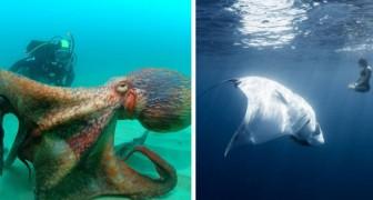 15 foto che ti faranno temere il mare come mai prima d'ora
