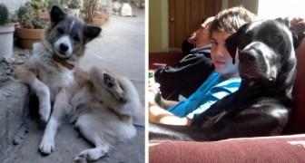 Des chiens se comportant comme des humains: la sympathie de ces photos va vous séduire