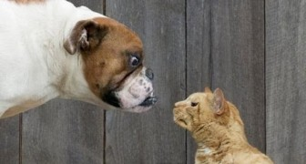 Cats Vs Dogs Compilation