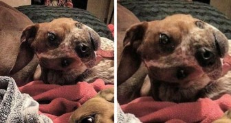 Les gens n'arrivent pas à comprendre ce qui ne va pas avec ce chien, et vous?