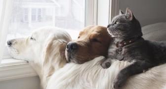 Questo dolce trio di amici ama stare sempre insieme: le loro foto spiegano perché tutti li amano