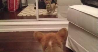 Mentre gioca, un cucciolo Si Vede per la Prima Volta allo Specchio: La reazione è esilarante!
