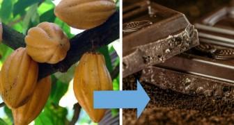 12 foto sorprendenti ci mostrano la VERA origine di alcuni alimenti molto comuni