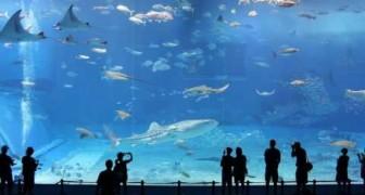 Le deuxième aquarium le plus grand du monde