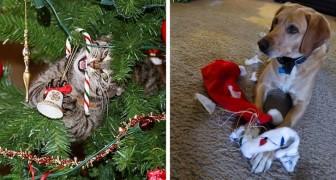 37 cani e gatti che sono riusciti anche quest'anno a mettere K.O. il Natale