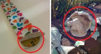 20 foto's van onverwachte dingen die in gewone voorwerpen gevonden werden