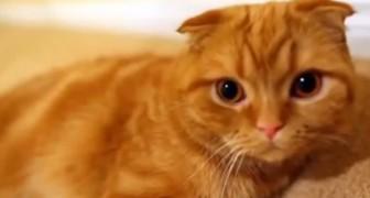 La particularidad de los gatos es que son tan divertidos y extraños