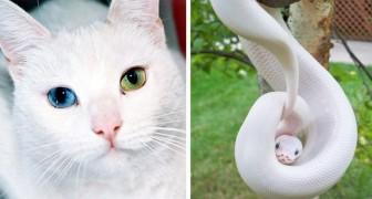 14 Tiere die in der genetischen Lotterie gleichzeitig gewonnen und verloren haben