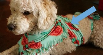 5 accorgimenti fondamentali per aiutare il vostro cane ad affrontare i fuochi di Capodanno