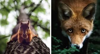Les photos de la faune finlandaise de ce photographe vous emmèneront dans un monde magique