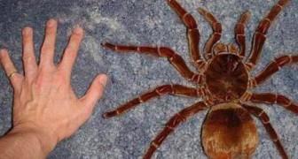 13 real existierende Kreaturen, die dem Wort groß eine neue Bedeutung geben