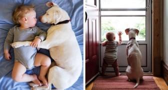 Ce chien maltraité a retrouvé la sérénité à côté d'un bébé: leurs photos sont adorables