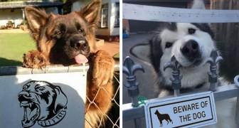 25 immagini di pericolosissimi cani (e gatti) dietro al cartello Attenti al cane
