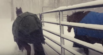 He lets his horses out during a snowfall, but the reaction is not what he expected ...