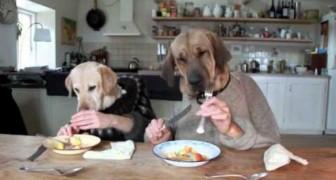A cena de dois cães educados