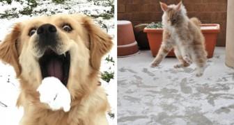 20 images amusantes d'animaux aux prises avec la première neige de leur vie
