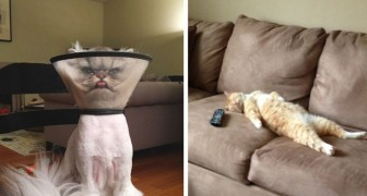 20+ photos of cats doing the type of things cat owners are well acquainted with!