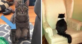 20 découvertes que l'on fait quand on adopte un chat