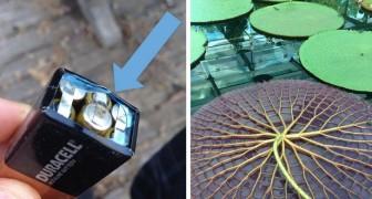 Ces images évocatrices nous révèlent l'aspect inconnu des objets et des situations courantes