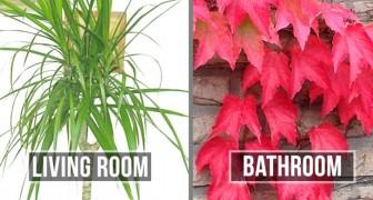 Le 15 piante migliori per ogni stanza della tua casa