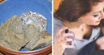 Ambre gris: voici comment le vomi de cachalot finit dans votre parfum