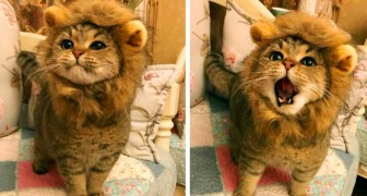 25 animals with fantastic expressions on their faces at the right time!