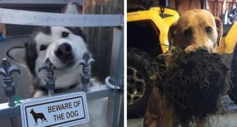 23 chiens qui gagneront votre cœur sans trop se forcer