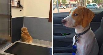 The exact moment when these dogs realized they were going to the vet and not to the park