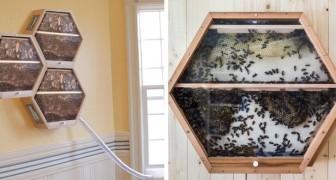 Diese Firma ermöglicht es, dass man Bienenkörbe im Wohnzimmer installiert und den Bienen dabei zusieht, wie sie die Welt retten