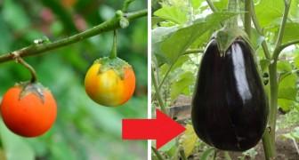 9 imagens impressionantes que mostram como os vegetais mudaram ao longo dos anos