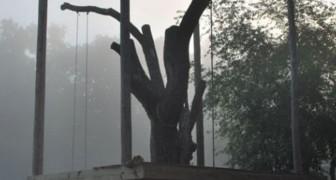 Een echtpaar bouwt een huis rond een stervende iep: het resultaat is verbazingwekkend