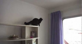 Le chat mission impossible