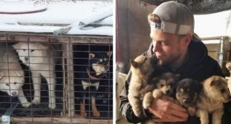 Ce skieur olympique a contribué à sauver 90 chiens de l'abattage en Corée du Sud