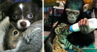 Deze foto's bewijzen dat dieren veel vriendelijker kunnen zijn dan wij