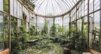 Teruggenomen door moeder natuur: een fotograaf laat zien hoe mooi verlaten plekken zijn die weer zijn 'Heroverd'