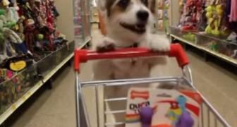 O cachorro faz tudo